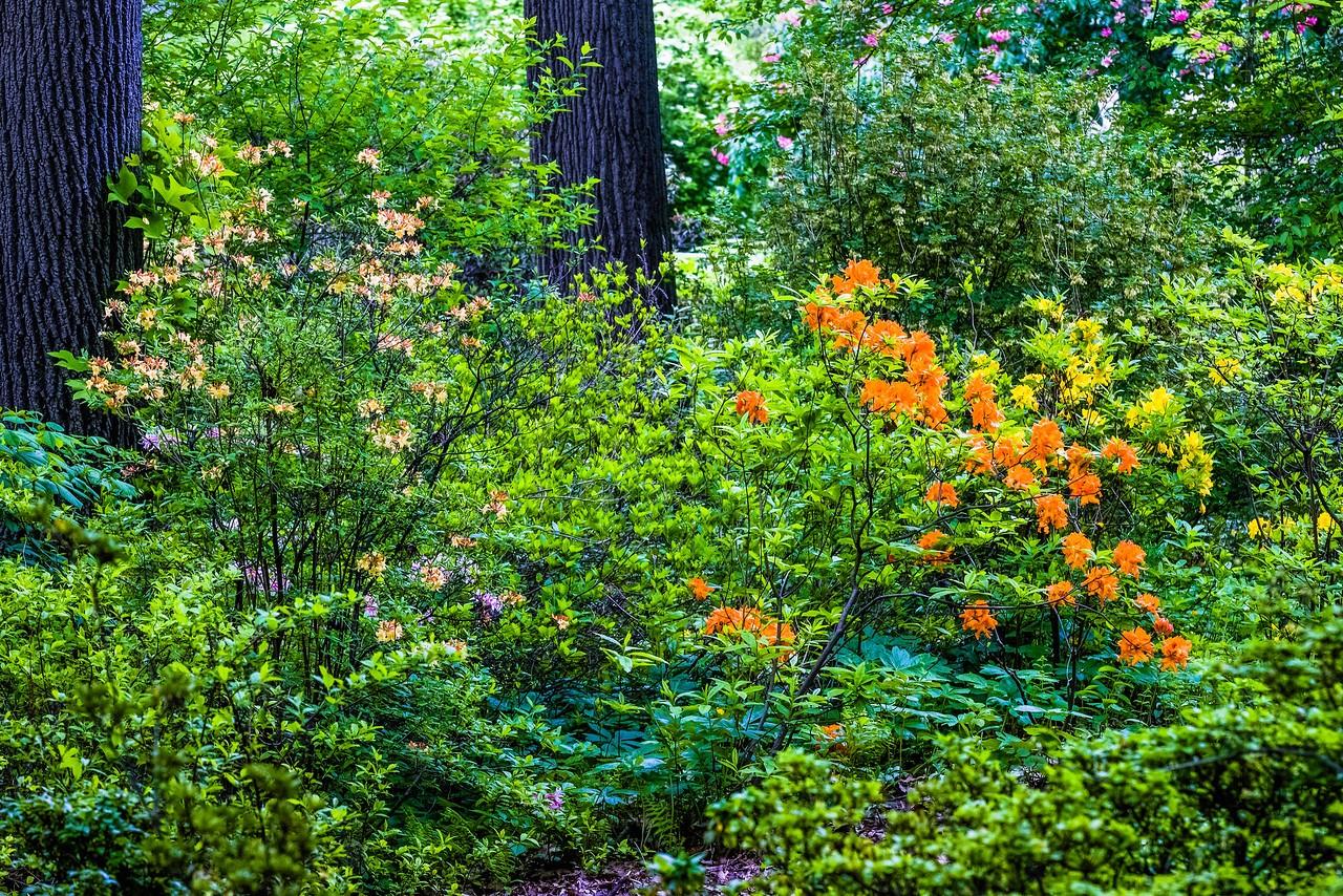 滨州詹金斯植物园(Jenkins Arboretum),美景如画_图1-4