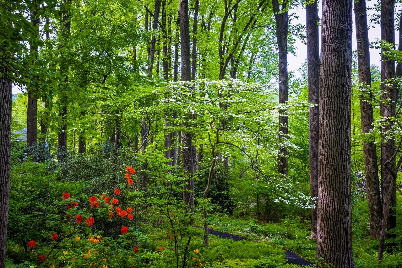 滨州詹金斯植物园(Jenkins Arboretum),美景如画_图1-3