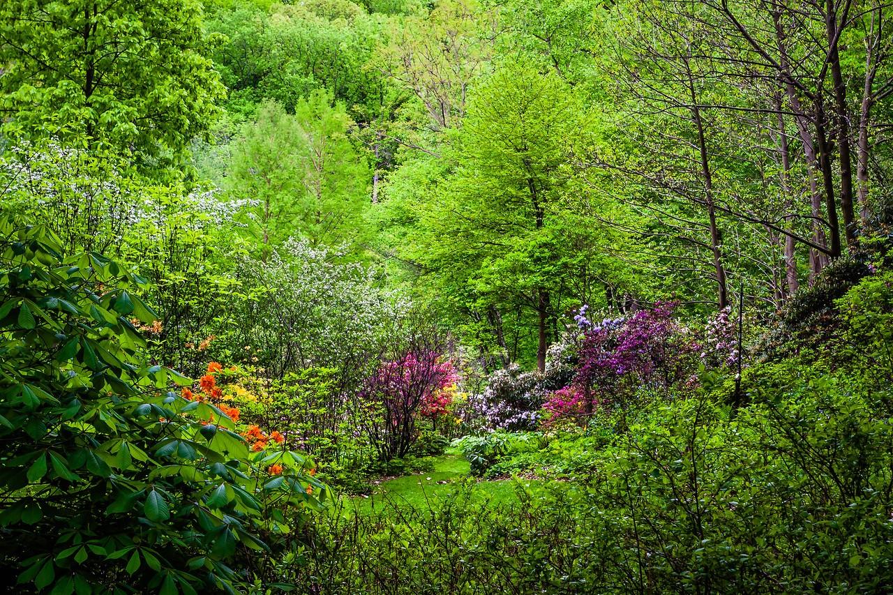 滨州詹金斯植物园(Jenkins Arboretum),美景如画_图1-2