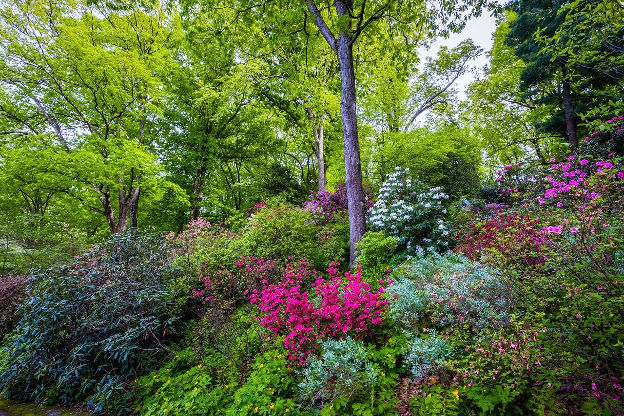 滨州詹金斯植物园(Jenkins Arboretum),美景如画_图1-12