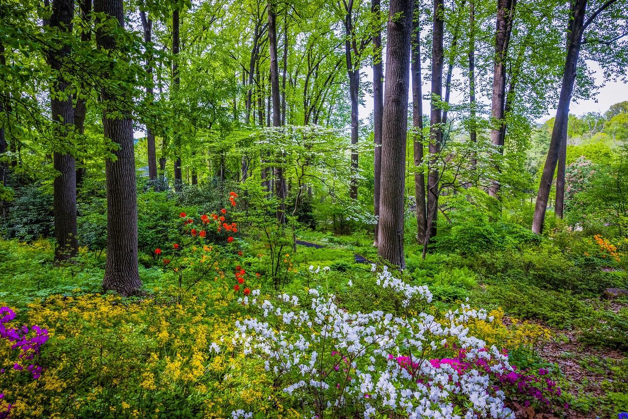 滨州詹金斯植物园(Jenkins Arboretum),美景如画_图1-1