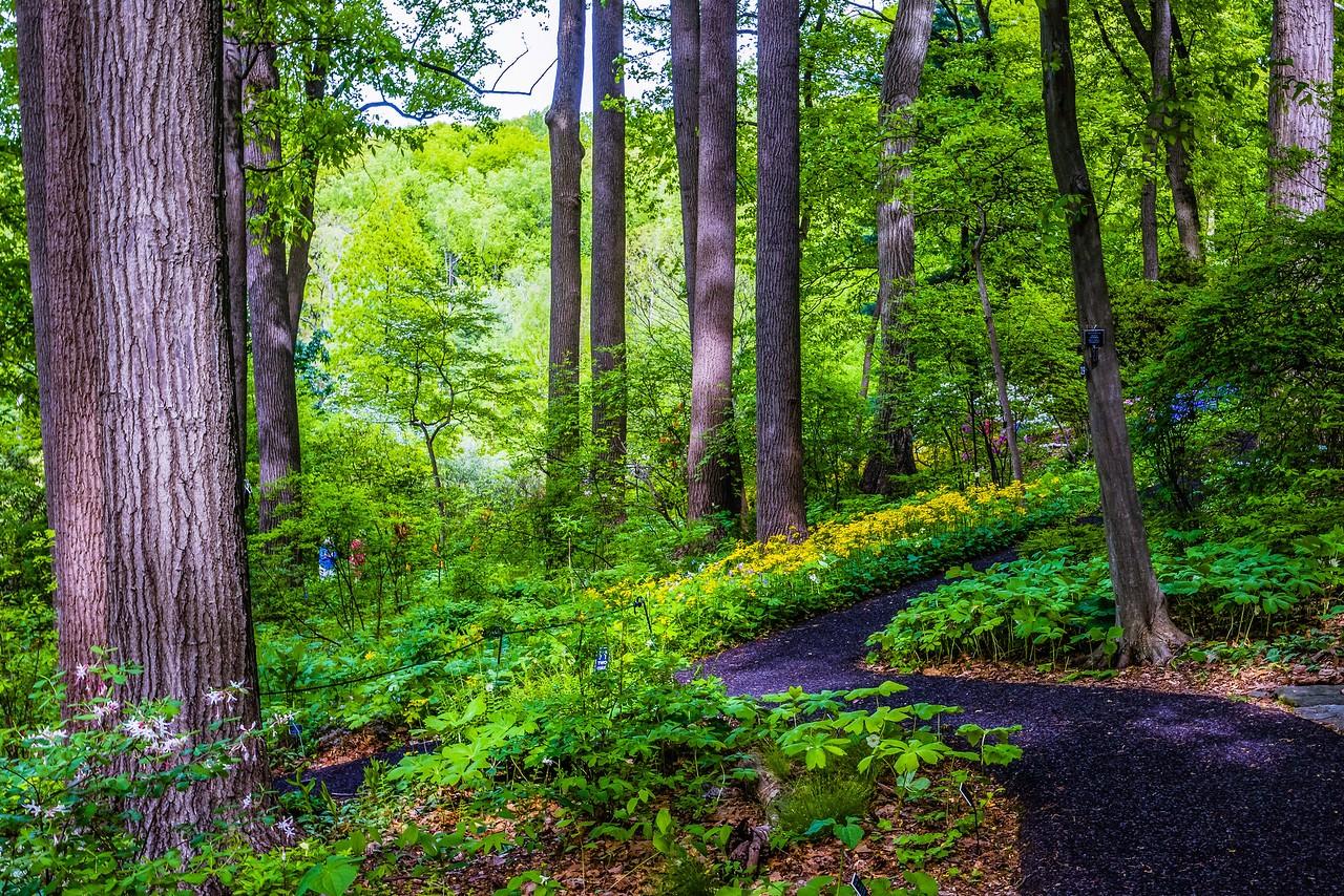 滨州詹金斯植物园(Jenkins Arboretum),美景如画_图1-11