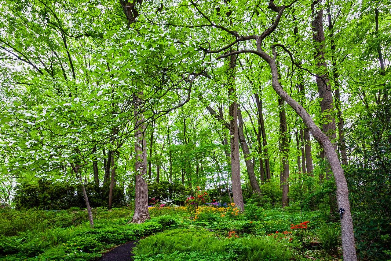 滨州詹金斯植物园(Jenkins Arboretum),美景如画_图1-9