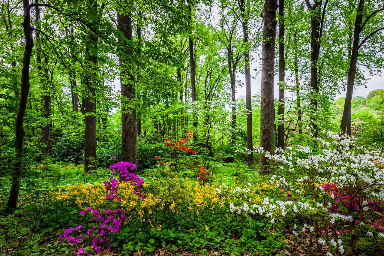滨州詹金斯植物园(Jenkins Arboretum),美景如画_图1-10