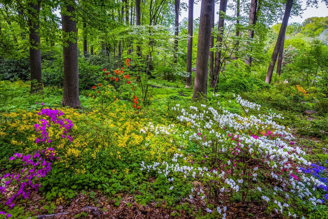 滨州詹金斯植物园(Jenkins Arboretum),美景如画_图1-13