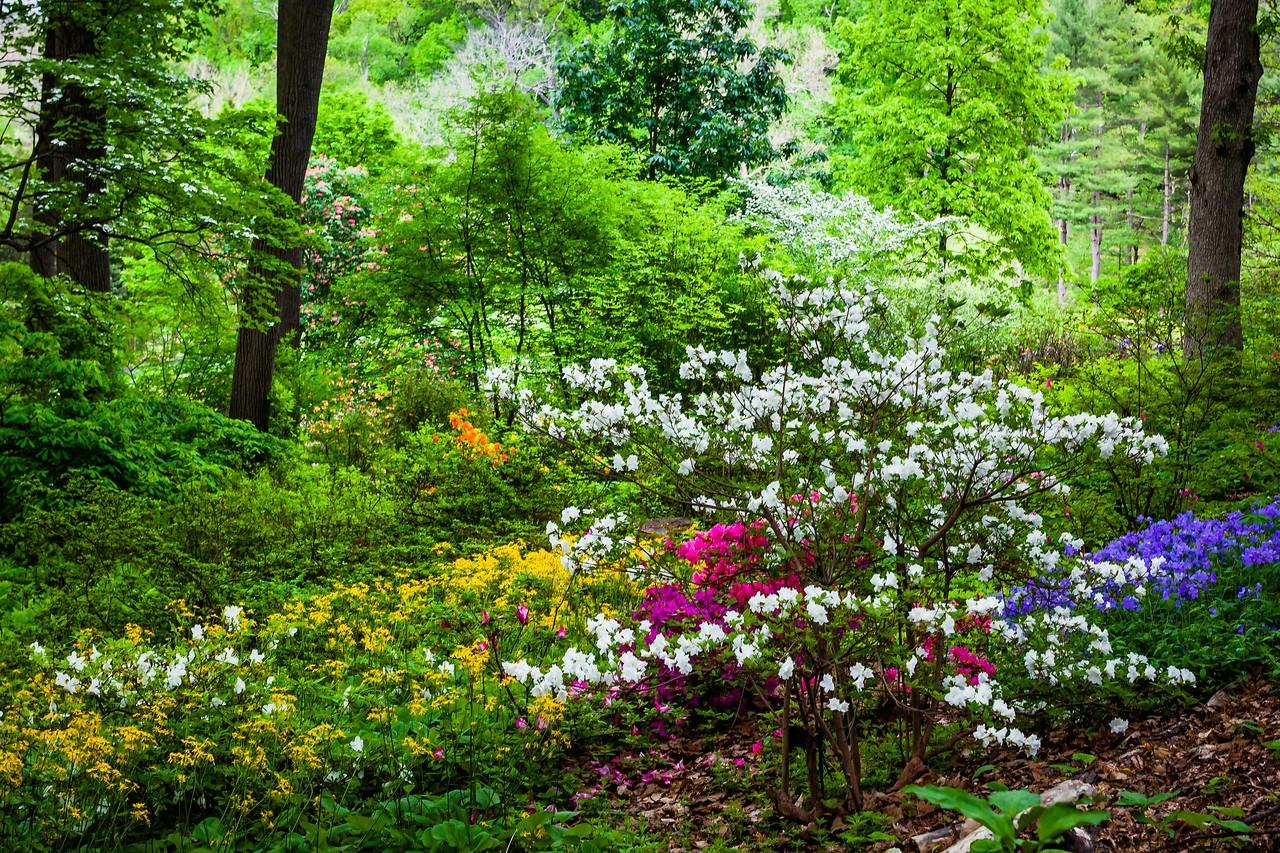 滨州詹金斯植物园(Jenkins Arboretum),美景如画_图1-14