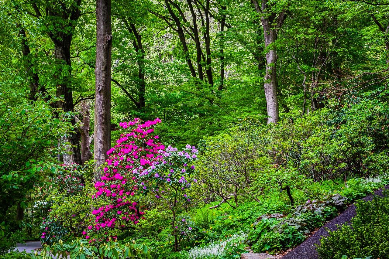 滨州詹金斯植物园(Jenkins Arboretum),美景如画_图1-15