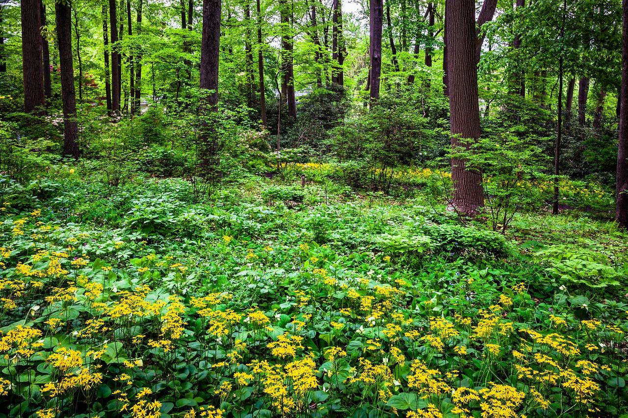 滨州詹金斯植物园(Jenkins Arboretum),美景如画_图1-19