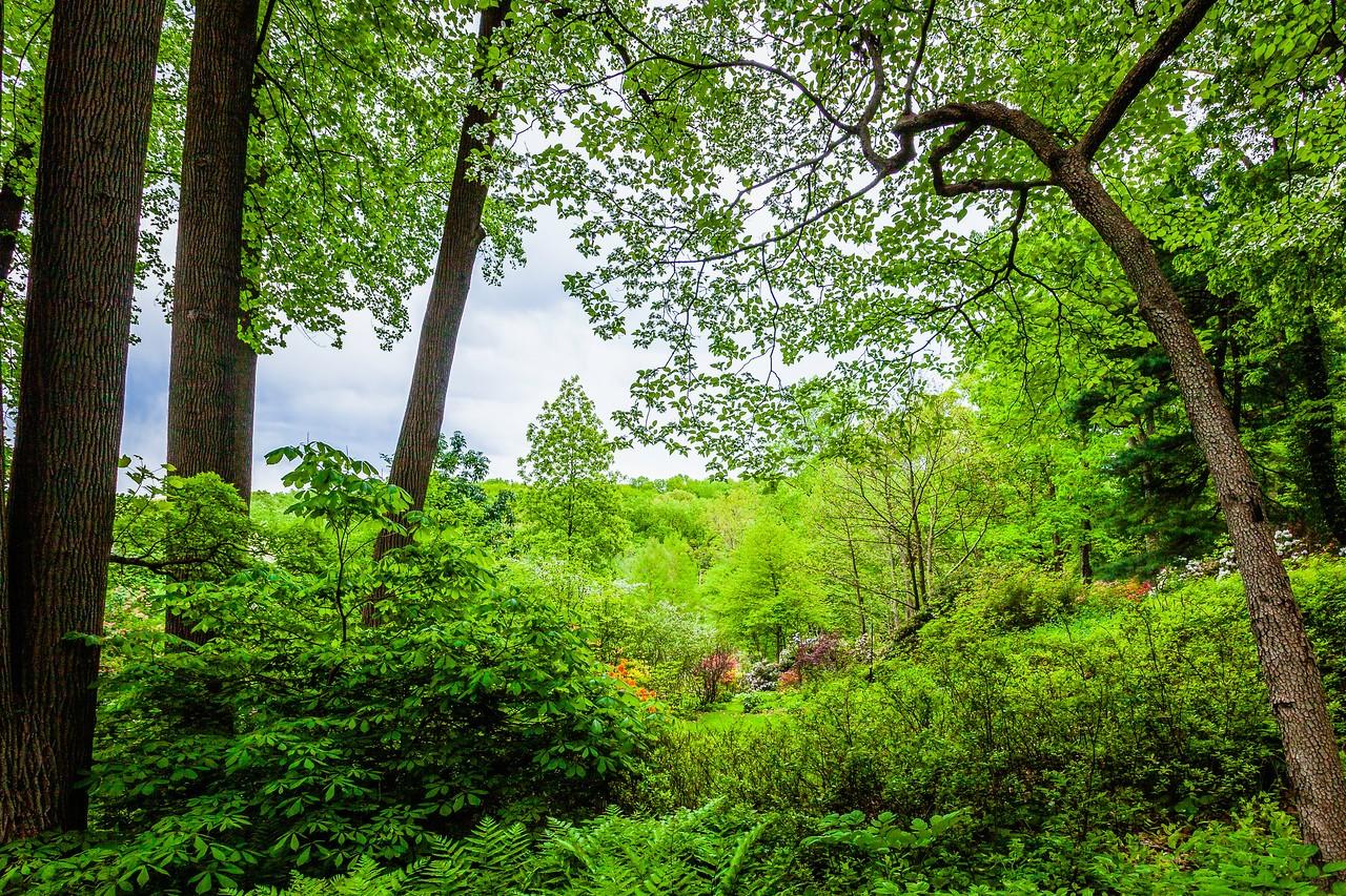 滨州詹金斯植物园(Jenkins Arboretum),美景如画_图1-17