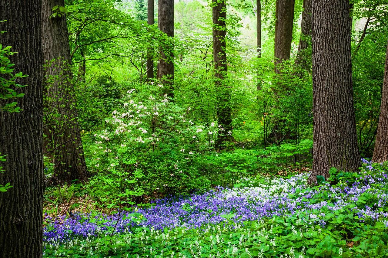 滨州詹金斯植物园(Jenkins Arboretum),美景如画_图1-18