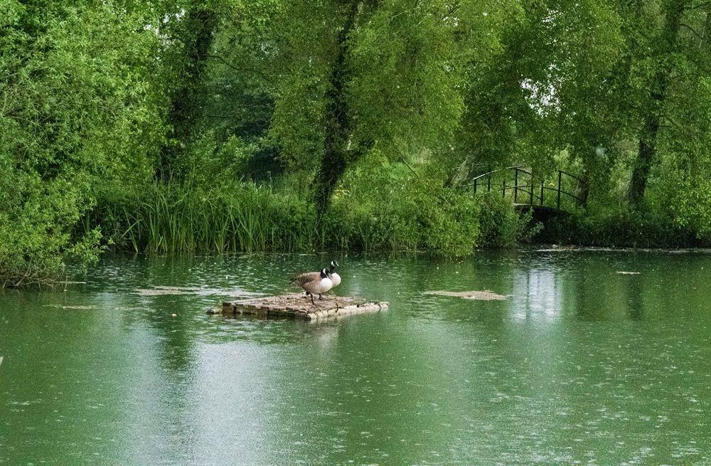 多塞特湖边的雕塑_图1-15
