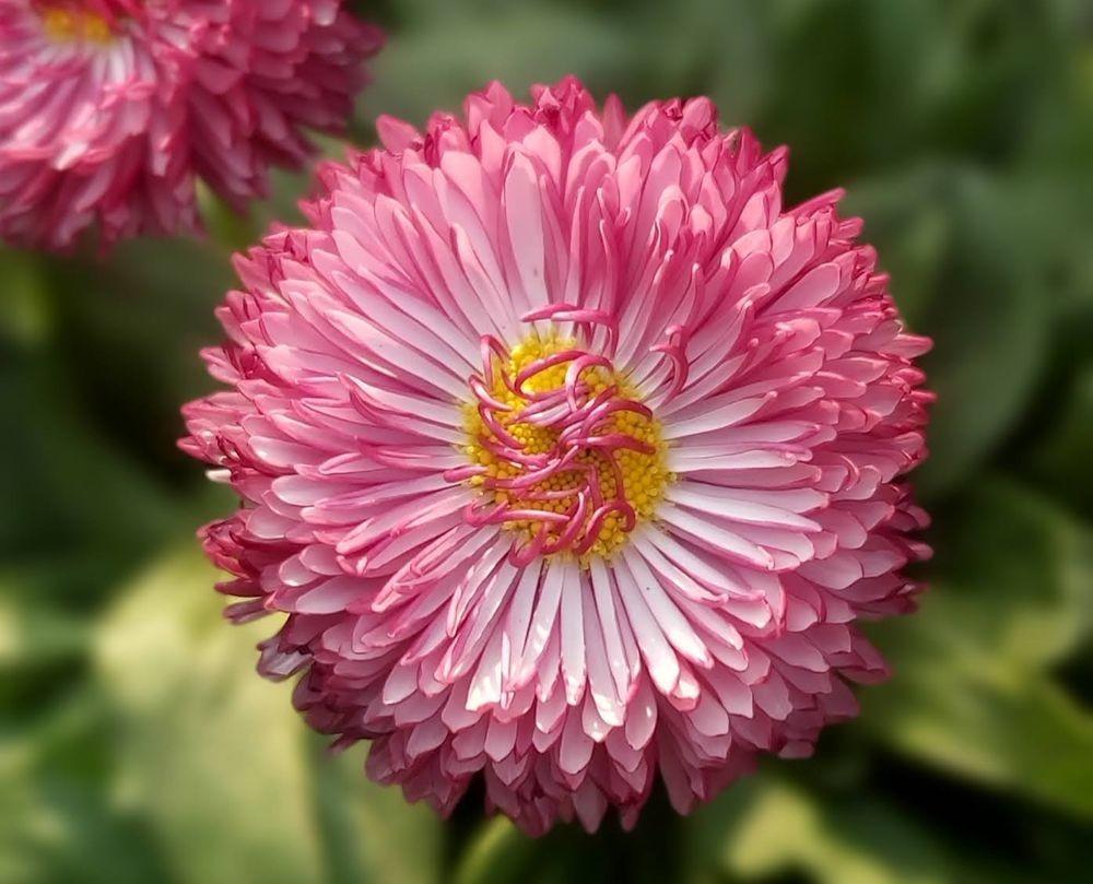 花卉日记-54_图1-1