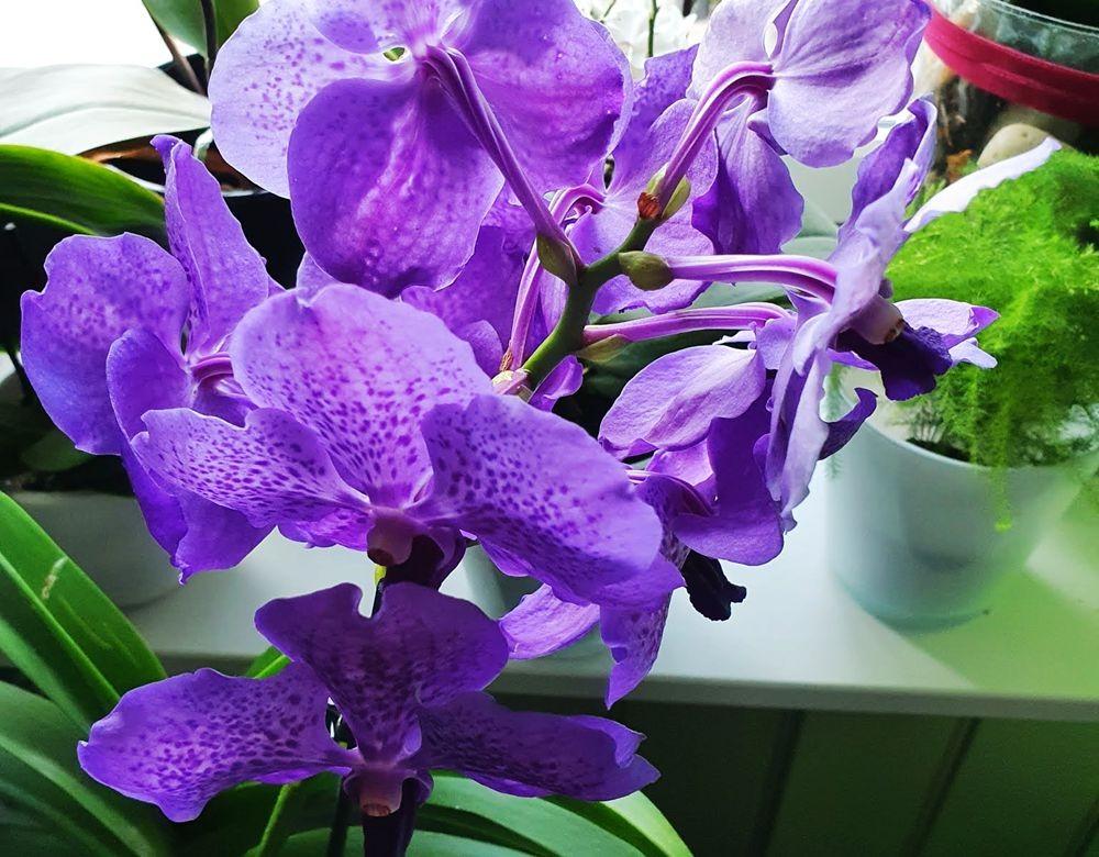花卉日记-54_图1-2