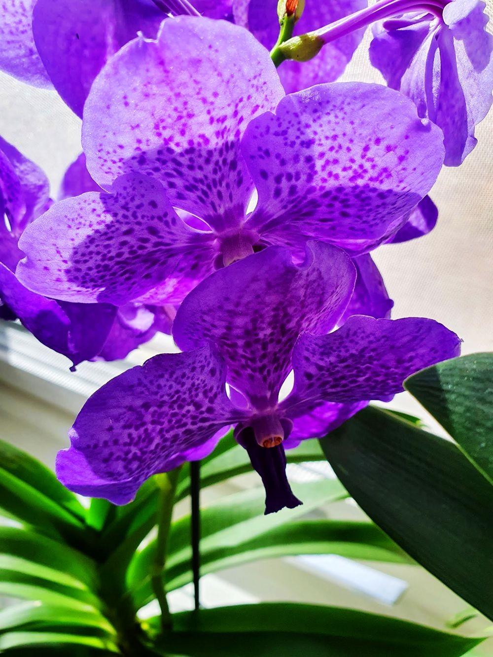 花卉日记-54_图1-3