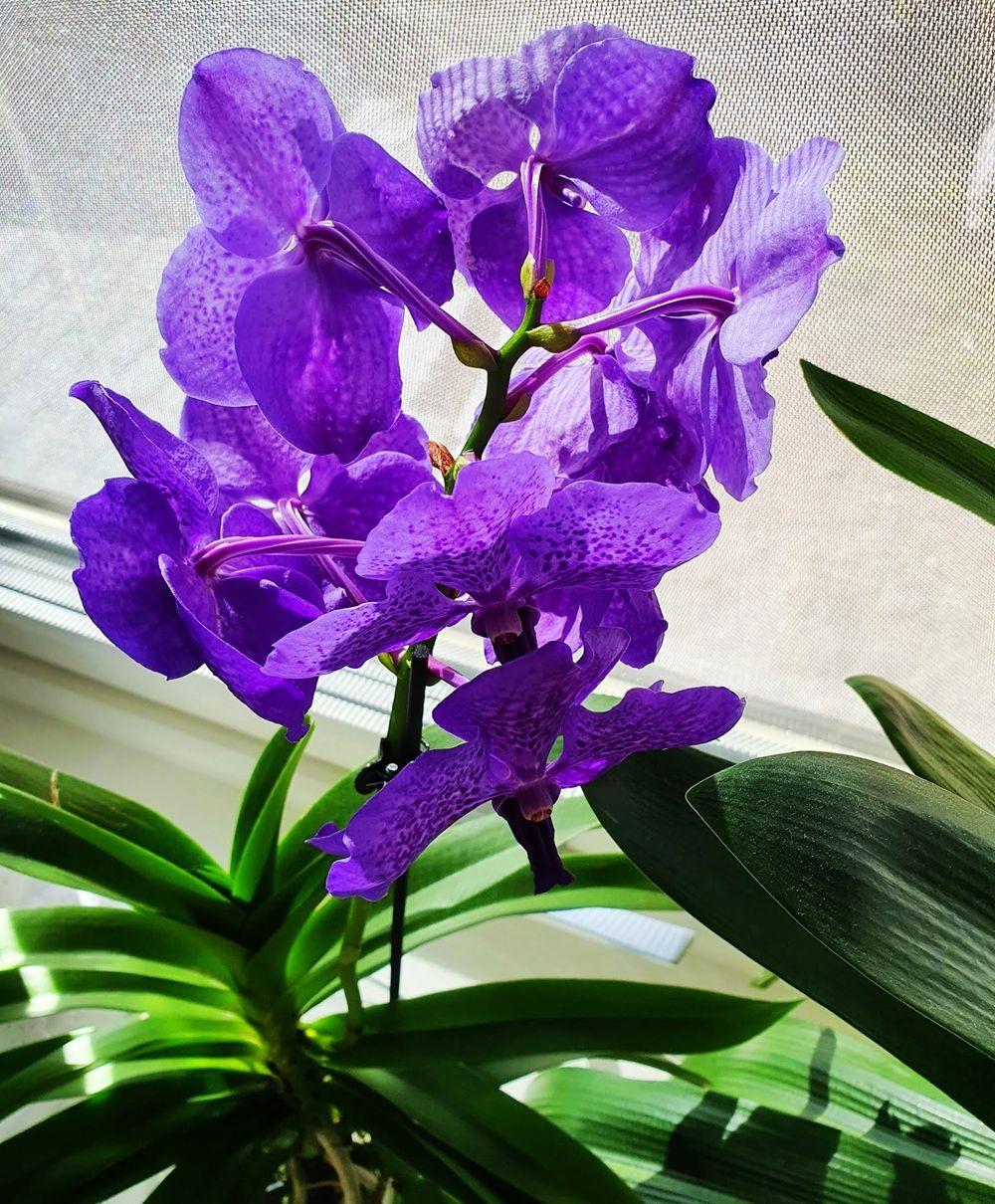 花卉日记-54_图1-4