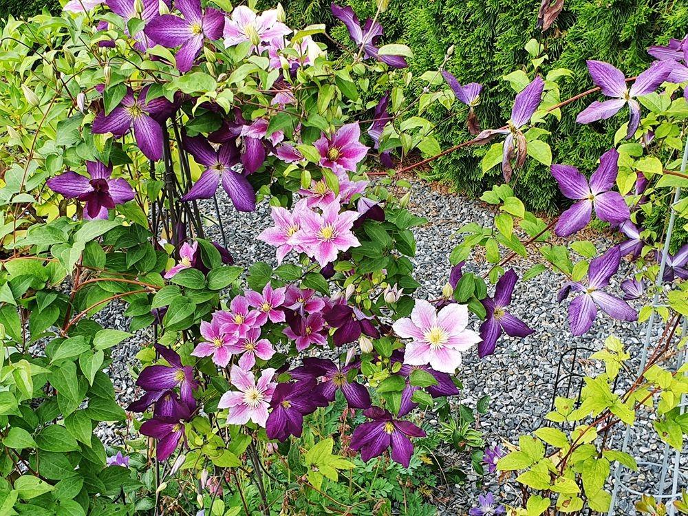 花卉日记-54_图1-5