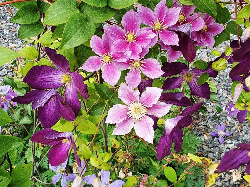 花卉日记-54_图1-7
