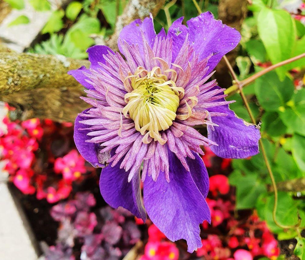 花卉日记-54_图1-8