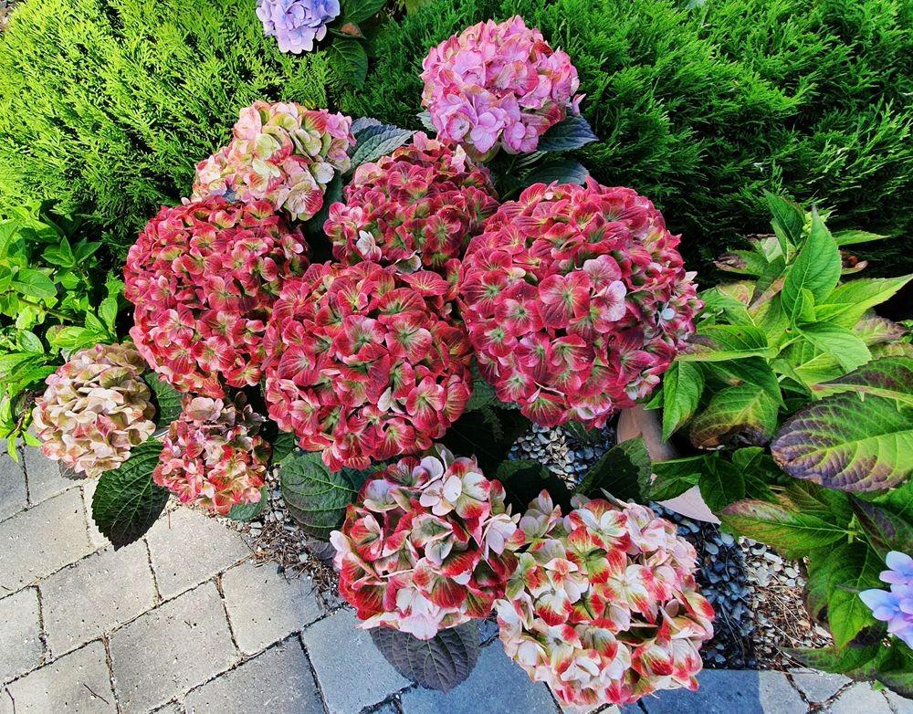 花卉日记-54_图1-9