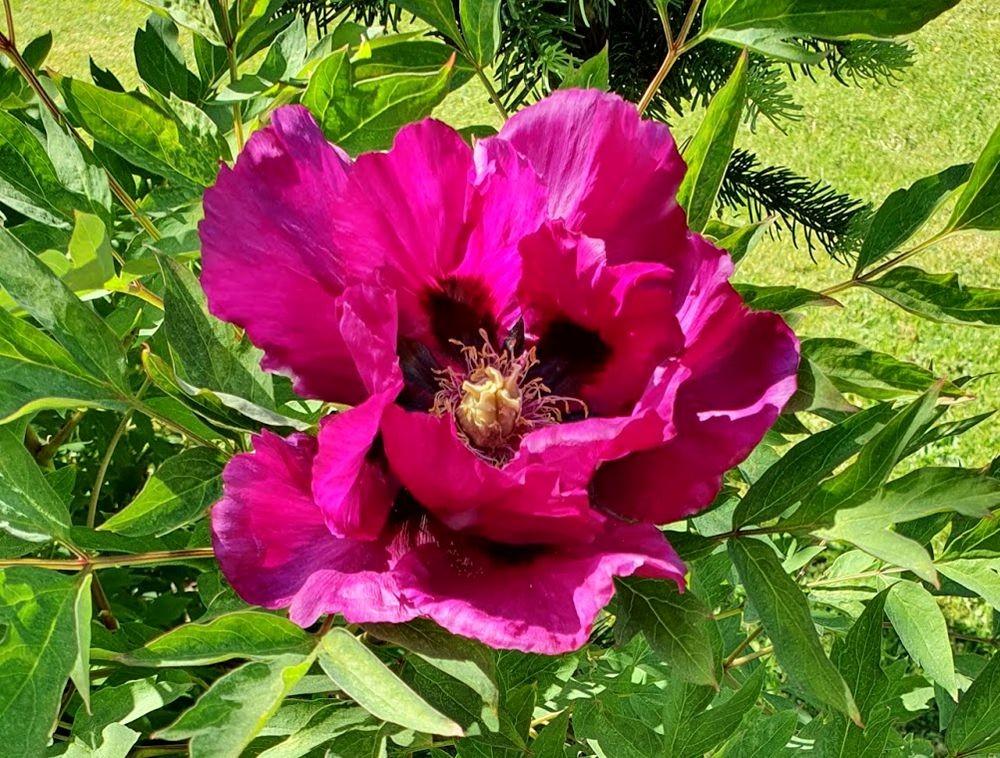 花卉日记-54_图1-13