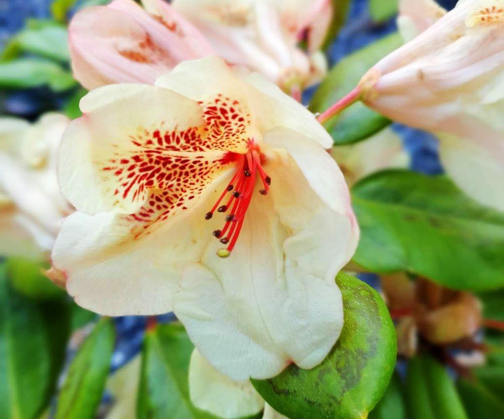 花卉日记-54_图1-14