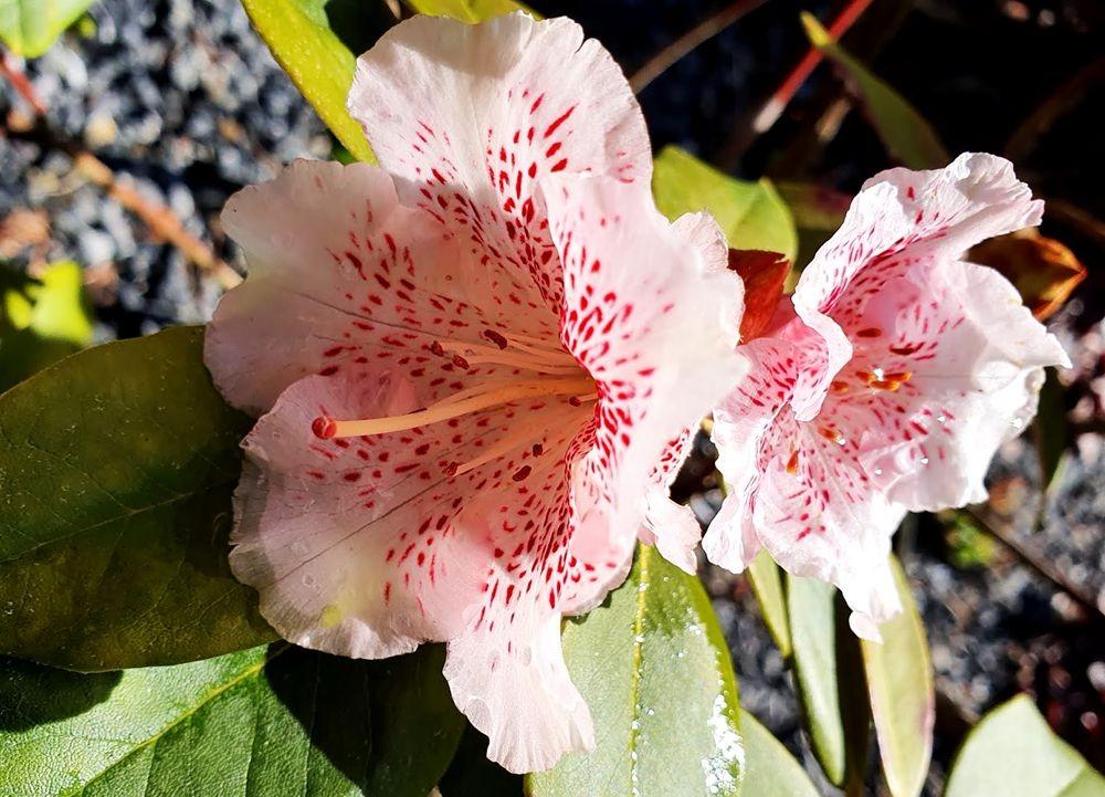 花卉日记-54_图1-15