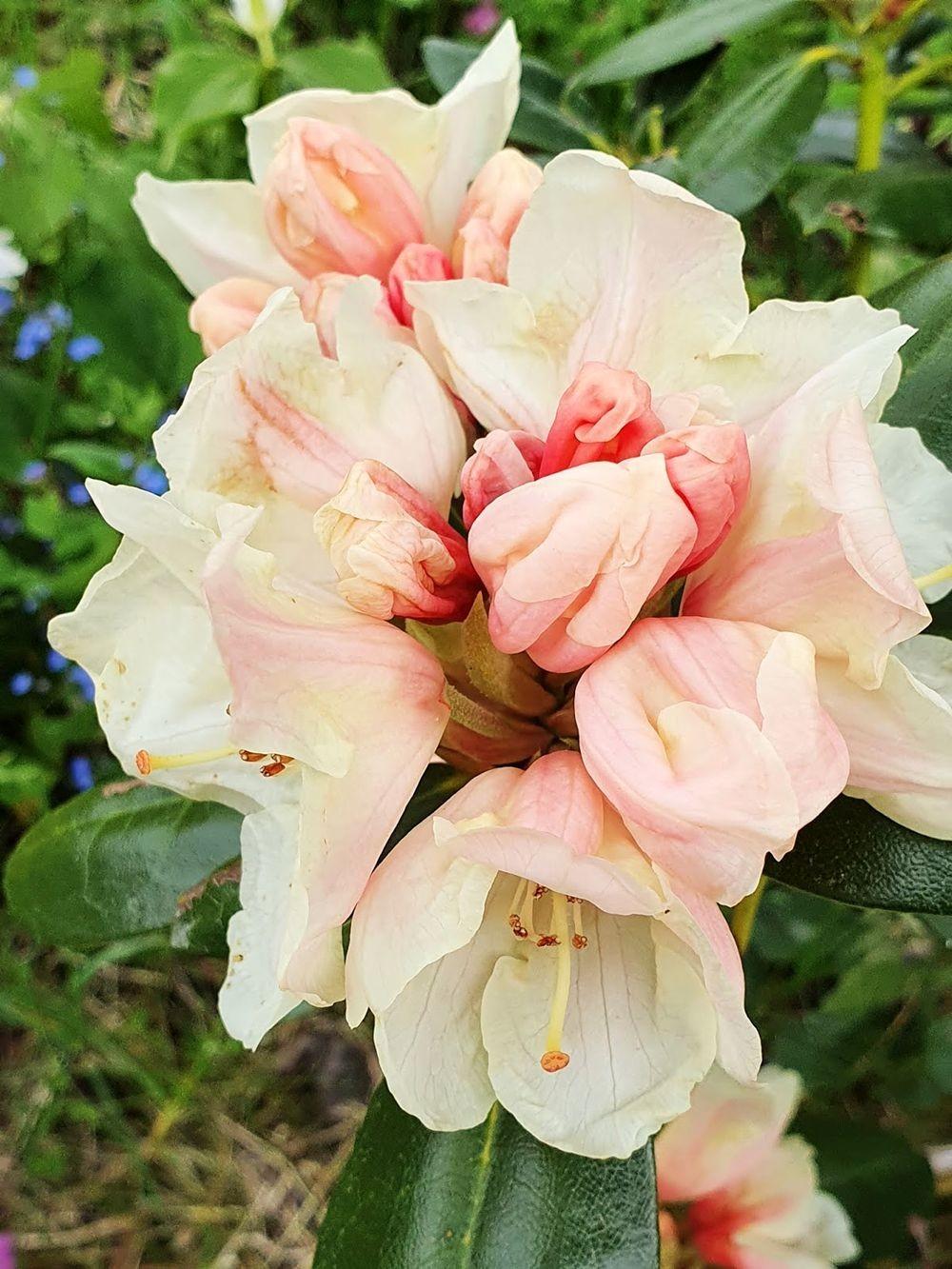 花卉日记-54_图1-16