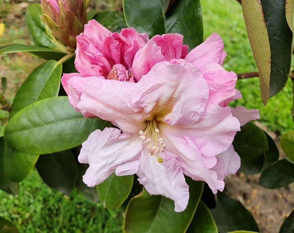 花卉日记-54_图1-17