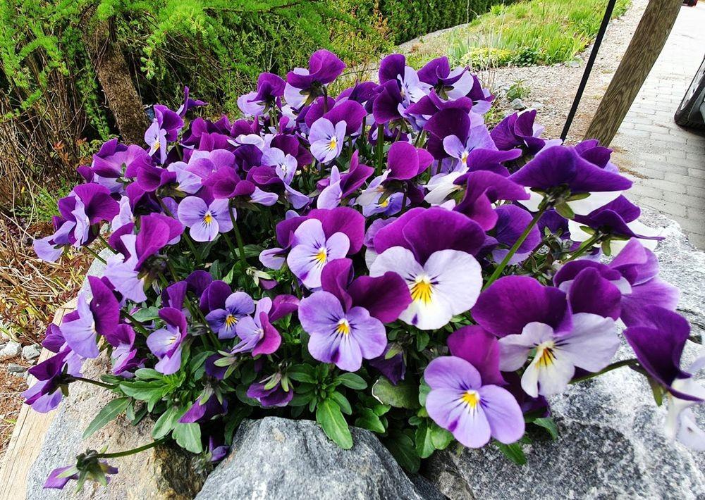 花卉日记-54_图1-18