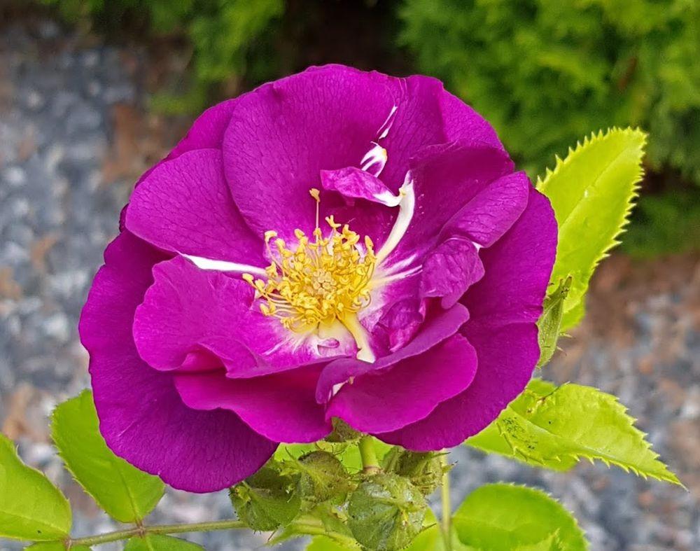 花卉日记-55_图1-1