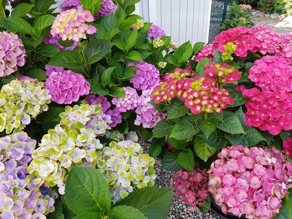 花卉日记-55_图1-2