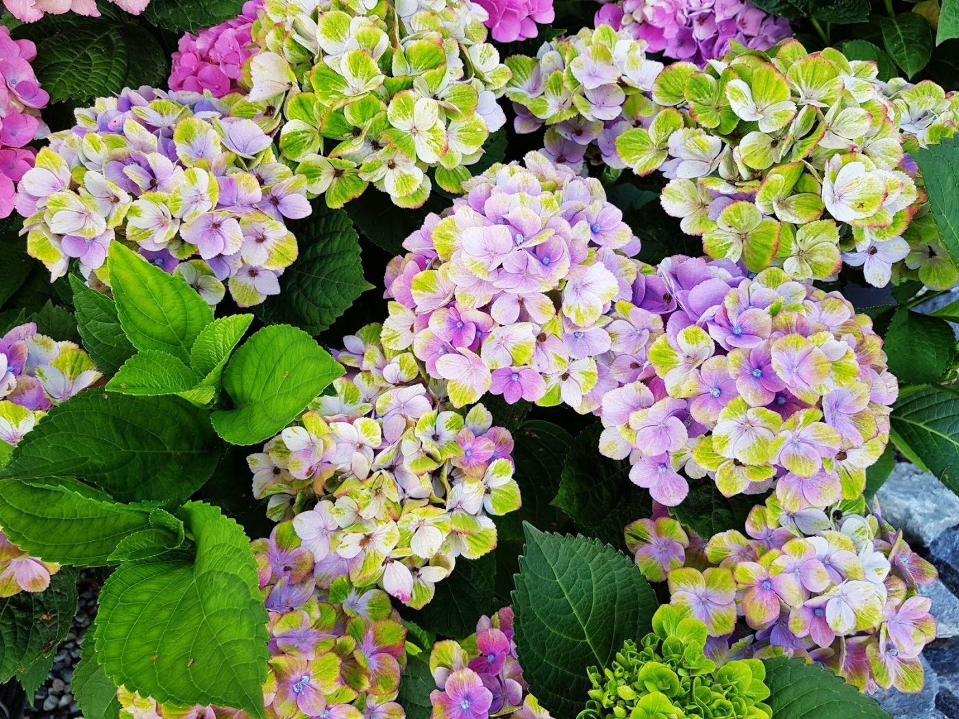 花卉日记-55_图1-3