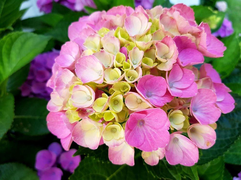 花卉日记-55_图1-4