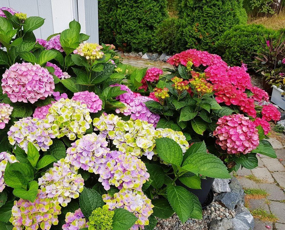 花卉日记-55_图1-5