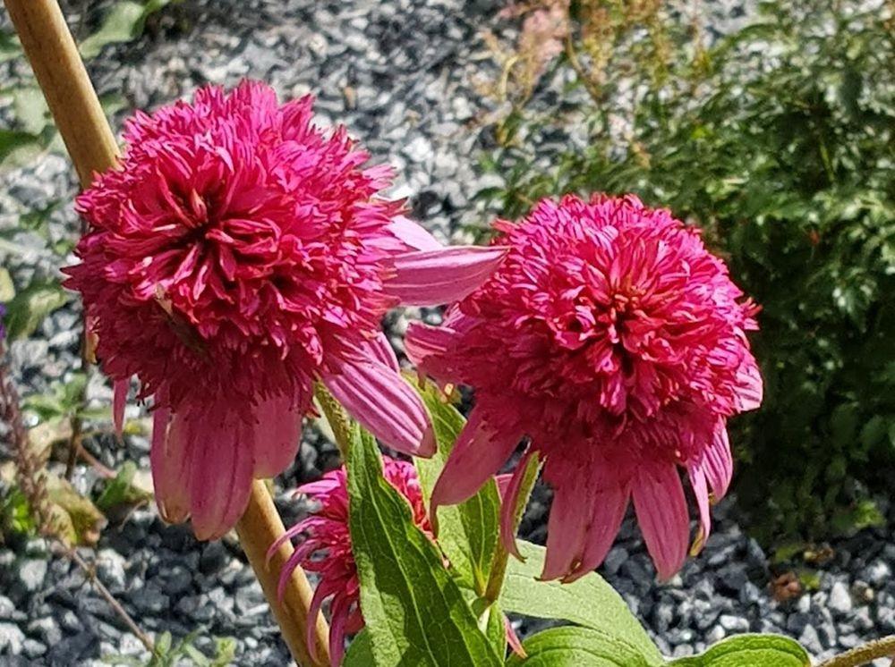花卉日记-55_图1-6