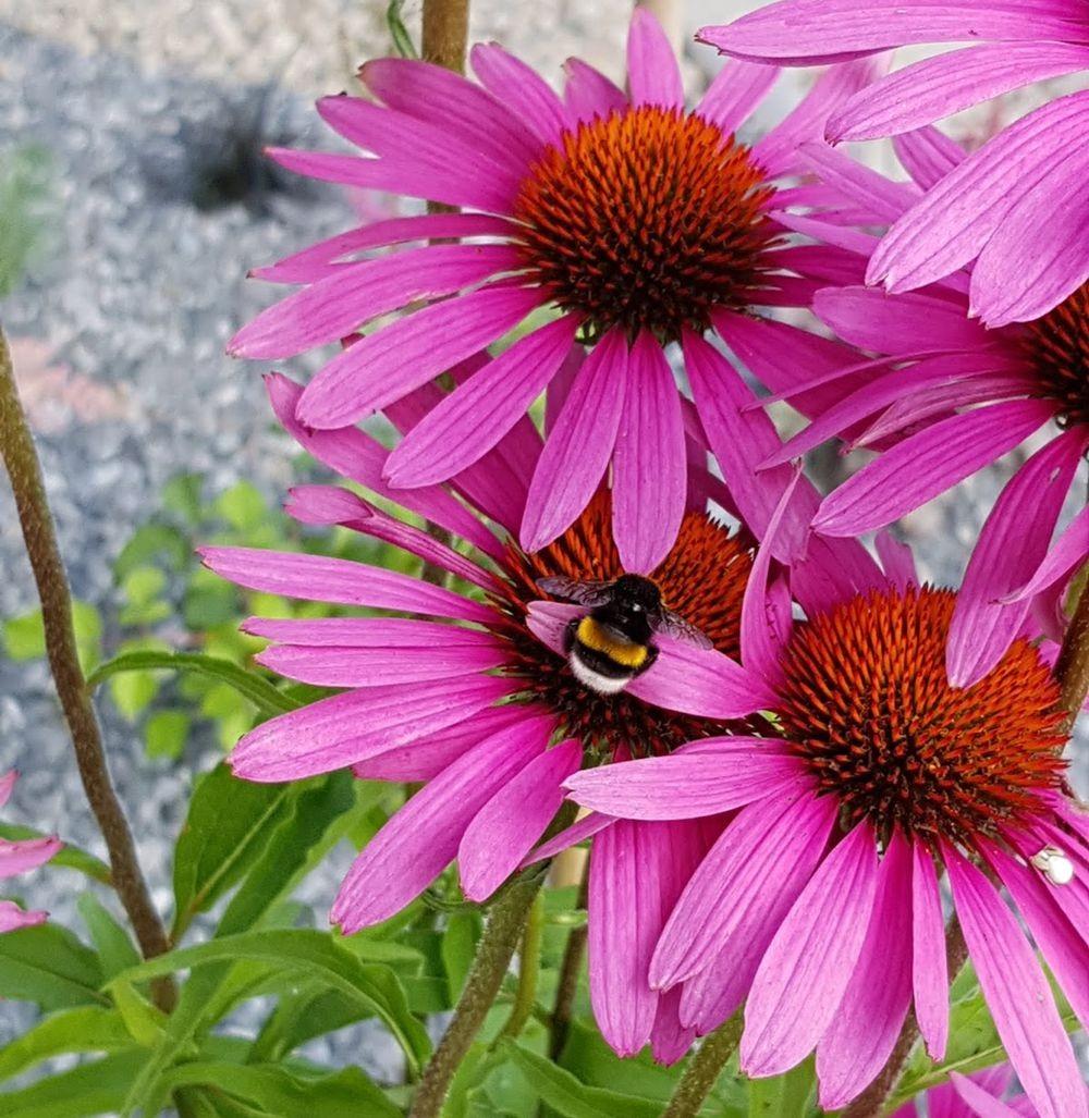 花卉日记-55_图1-8