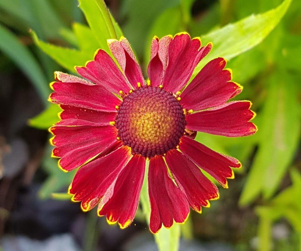 花卉日记-55_图1-9