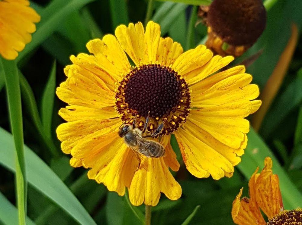 花卉日记-55_图1-10