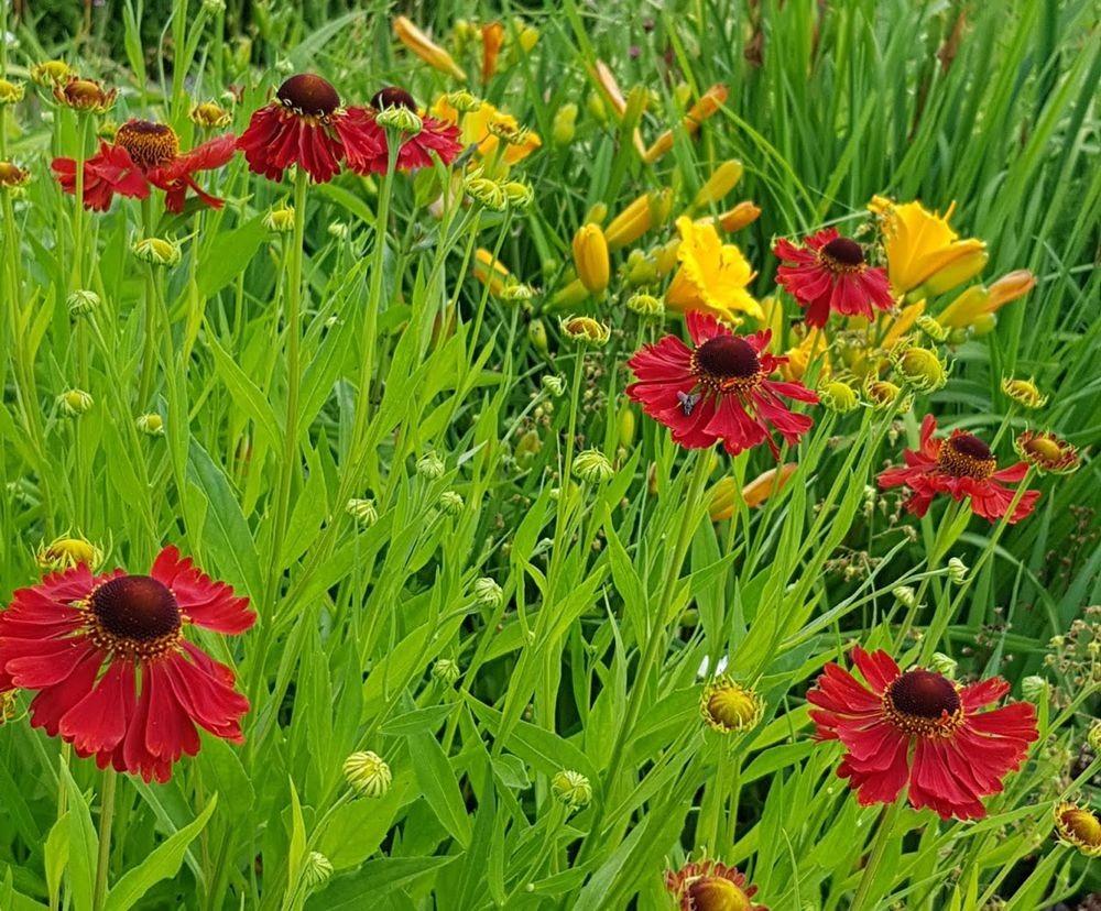 花卉日记-55_图1-11