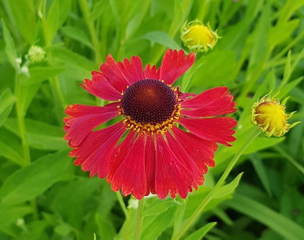 花卉日记-55_图1-12