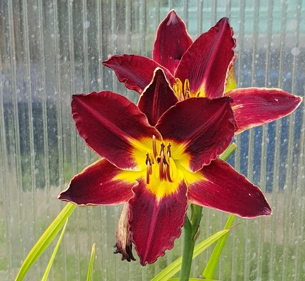 花卉日记-55_图1-13
