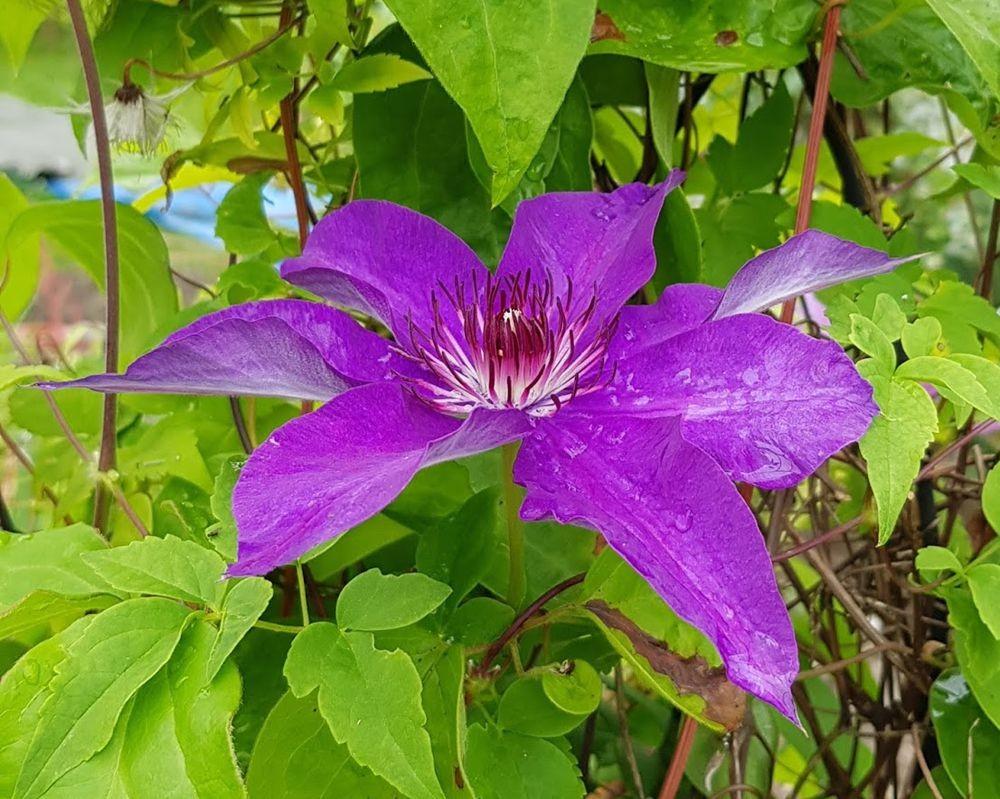 花卉日记-55_图1-18