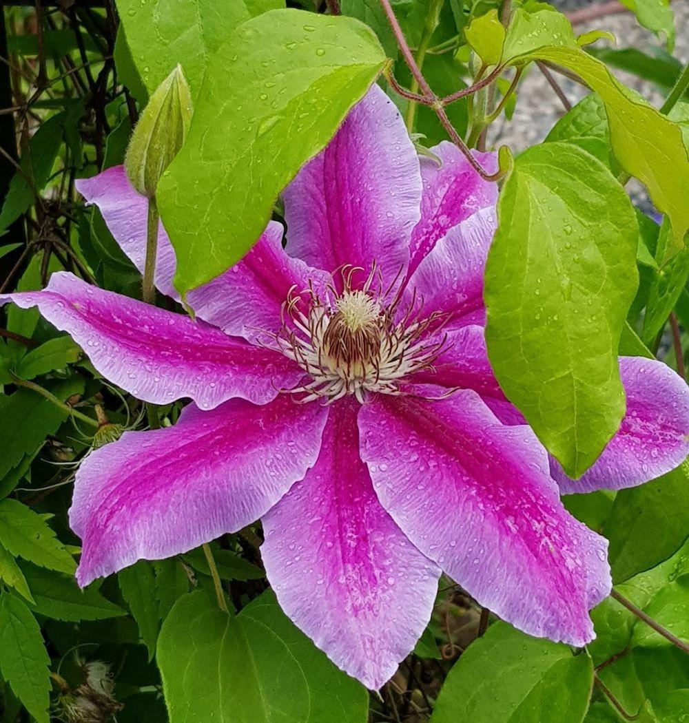 花卉日记-55_图1-19