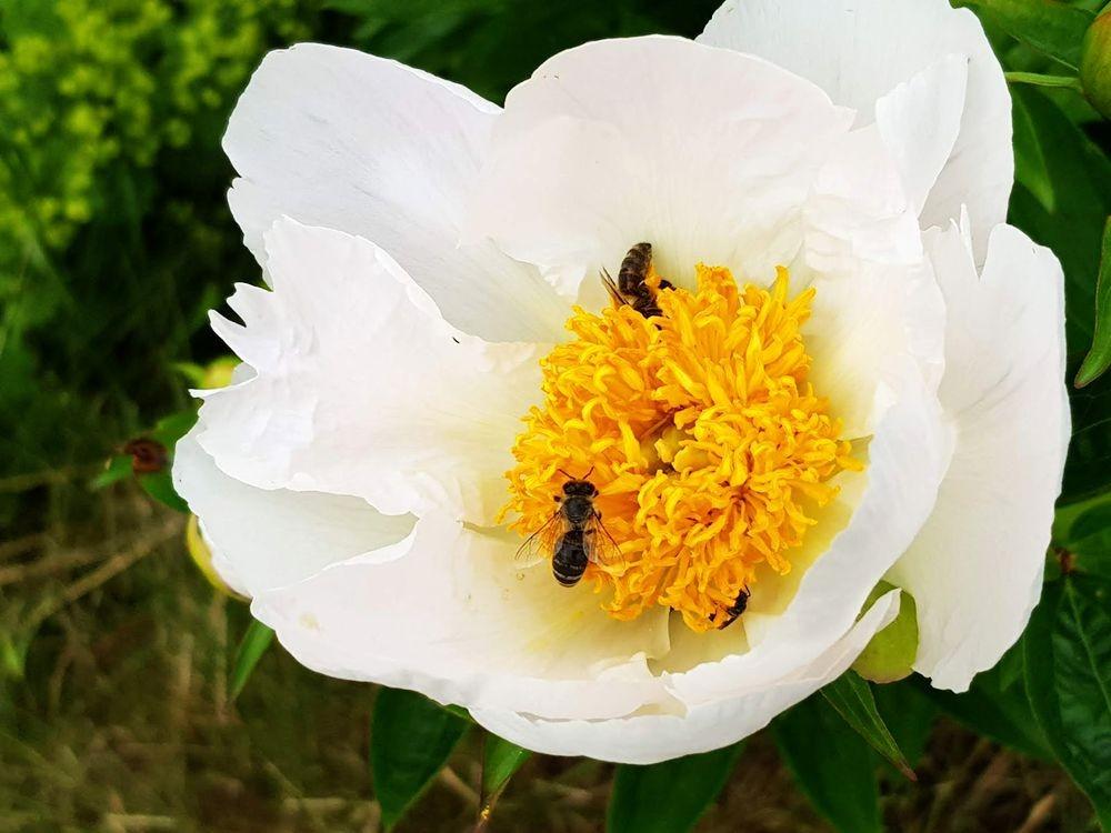 花卉日记-55_图1-21