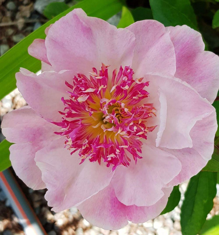 花卉日记-55_图1-22