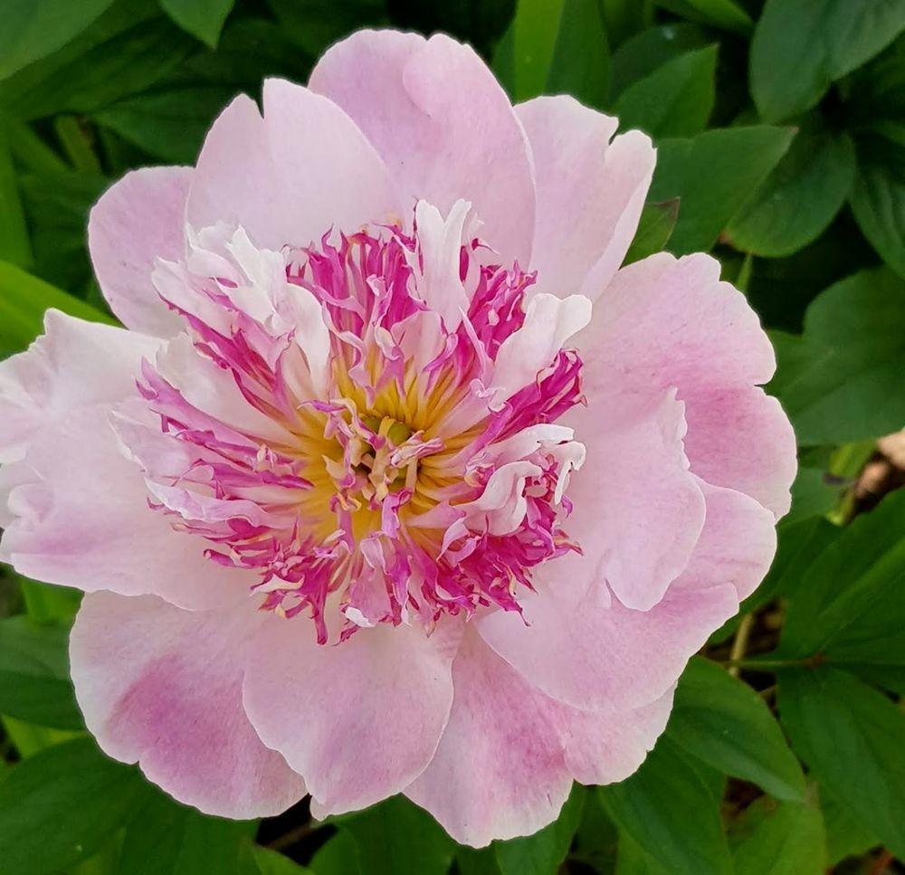 花卉日记-55_图1-23