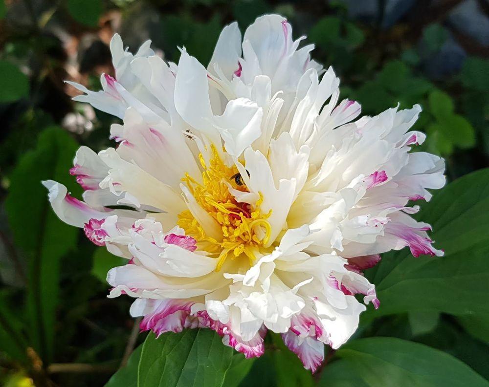 花卉日记-55_图1-24