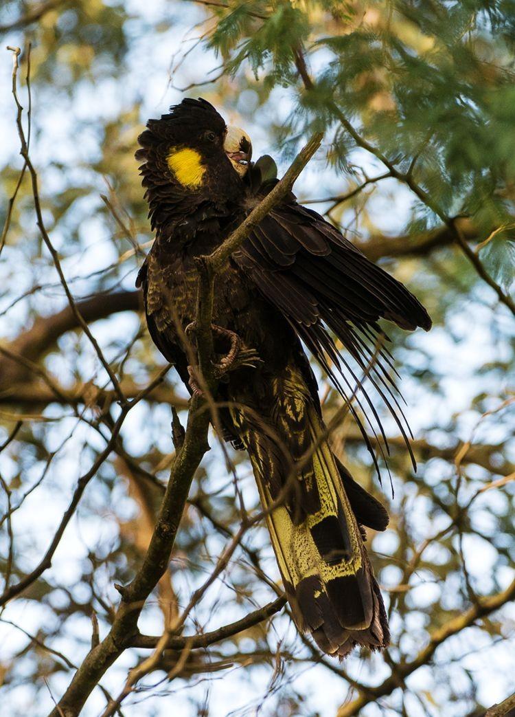 保护区内的澳大利亚鹦鹉_图1-10
