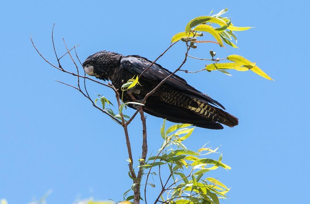 保护区内的澳大利亚鹦鹉_图1-11