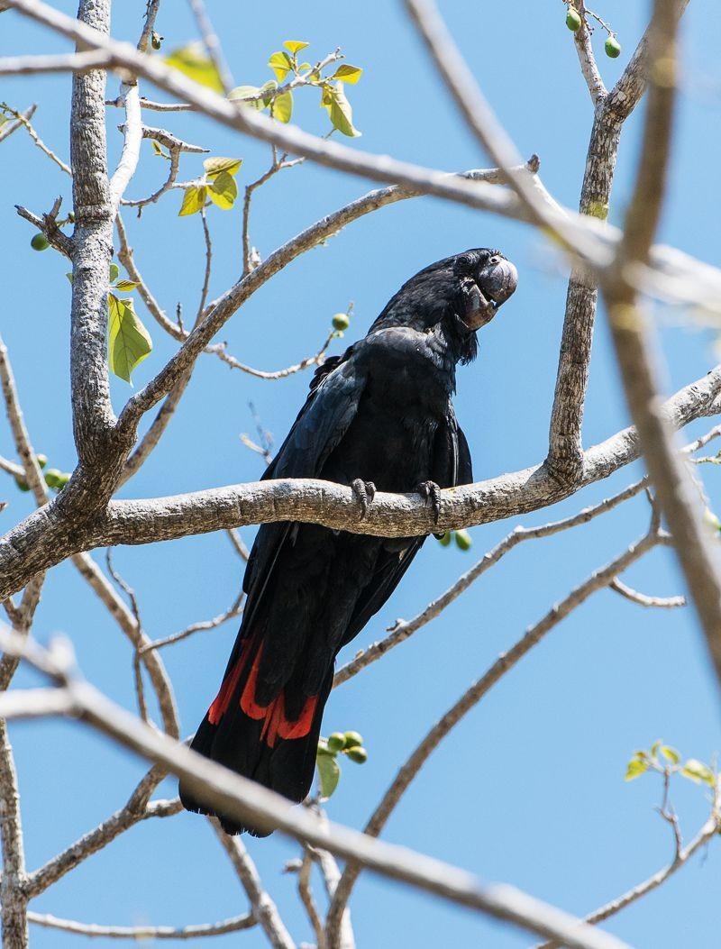 保护区内的澳大利亚鹦鹉_图1-15